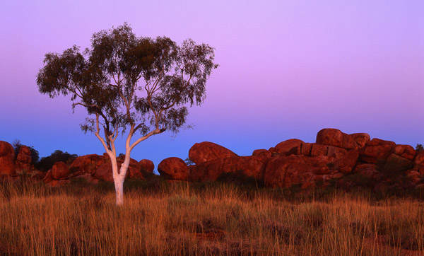 Outback. El koala asesino