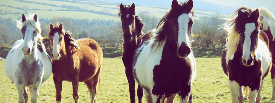 ¡Hay un caballo en mi vinilo! Las mejores canciones sobre caballos
