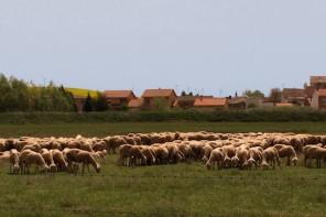 Festivales rurales, literatura 'al fresco'