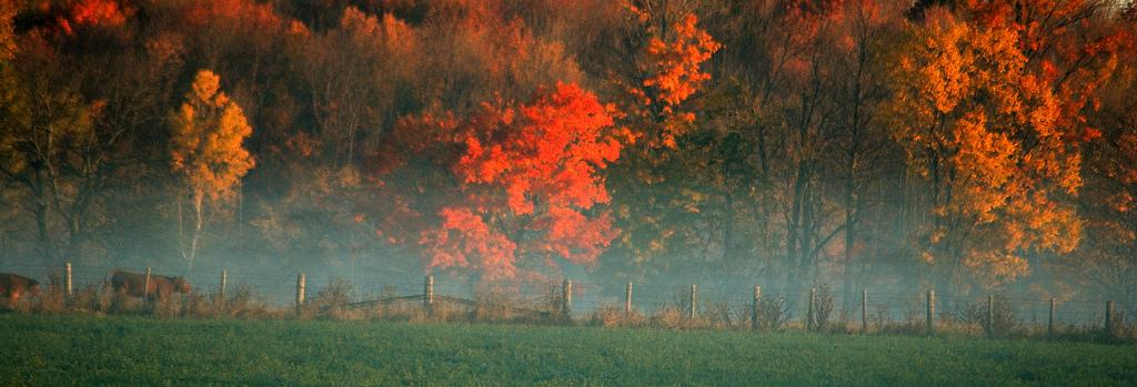 árboles-colores-camino-nokton-magazine