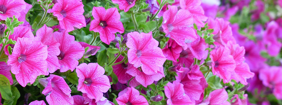 petunia-agenda-abril-primavera