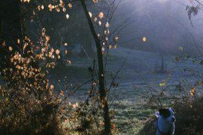 Bosque, pájaros y canciones de amor a quemarropa