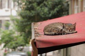 'Kedi': los gatos que conquistan Estambul