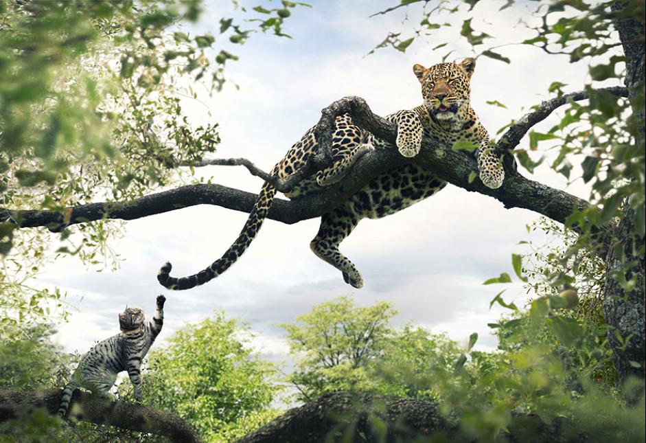 sony-fotografias-increibles-gato