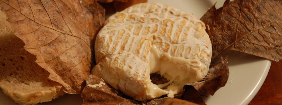 Queso Camembert sobre hojas.