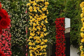 In Water Flowers en Festival Flora.