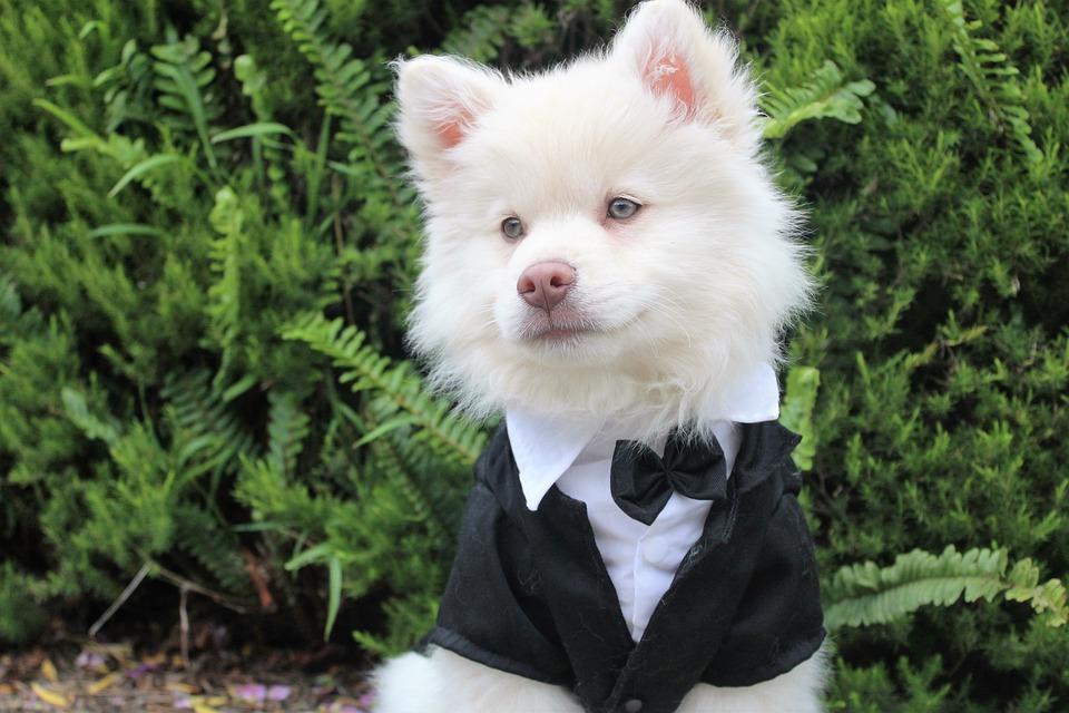 Perro de traje.