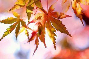 Arte desde las hojas de los árboles