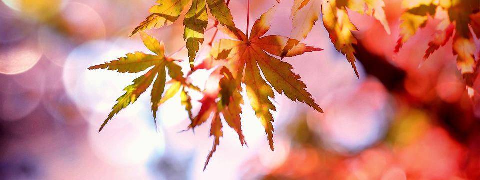 Arte en hojas de los árboles.