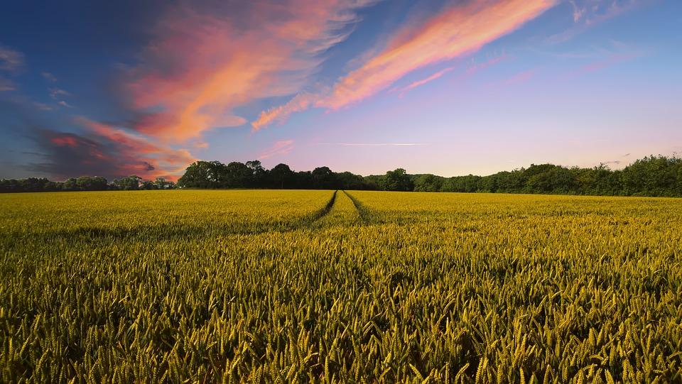 Agricultura regenerativa.