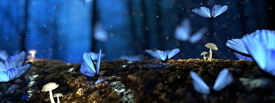 Leemos 'La habitación de las mariposas'.